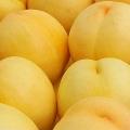 黃桃樹苗批發