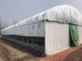 供應食用菌溫室大棚薄膜PEP綠白膜