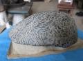 關于貝殼化石的拍賣流程