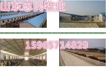标准化养牛厂建设