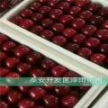 3公分拉宾斯樱桃苗一棵多少钱,拉宾斯樱桃苗