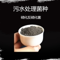 安徽污水處理菌種 生物降解法高效降解cod氨氮值