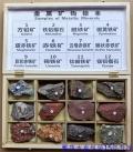昆蟲標本木盒、巖石標本木盒生產定做15年經驗