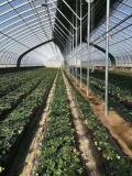 溫室大棚專用橢圓管建造優點