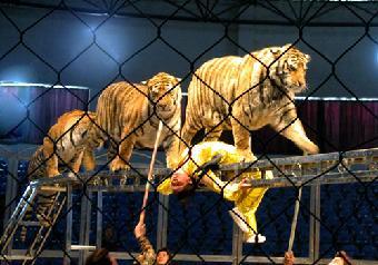 马戏团视频v视频(动物、图片)视频打欠搞笑图片