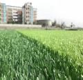 足球場人造草皮生產廠家安裝價格