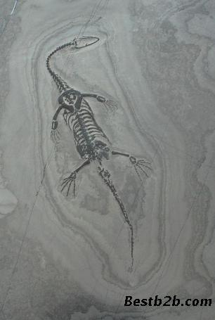 鳄鱼的素描画法步骤