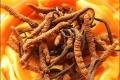 蟲草收購電話 回收冬蟲夏草電話 回收禮盒蟲草