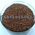 国产藜麦种子宁夏厂家 常年供应红藜麦种子出芽率高
