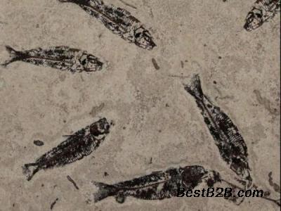 华豫之门古钱币v视频鱼视频化石杨安图片