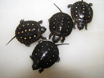 小型的甲壳动物