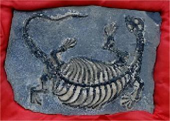 爬行动物化石的市场