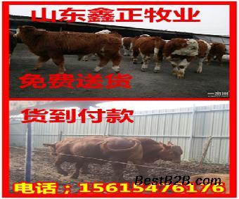 育肥牛养殖技术_志趣网一食谱大全小孩一个岁月图片