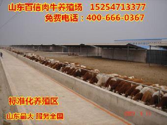 昌江县标准化养牛场