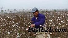 北京 红灯/大型摘棉花机我爱发明摘棉花机便携式摘棉花机