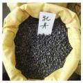 出售牡丹种子==牡丹籽==绛县牡丹籽大量出售