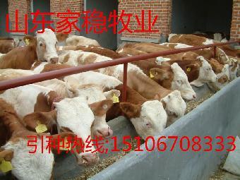 标准化养牛场建设-养牛场设计图 天津大型养牛
