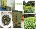 廣州明前茶沖泡方法炒春茶綠茶廣州春茶沖泡方法
