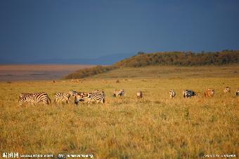 义乌肯尼亚签证去哪办 义乌办理肯尼亚签证需