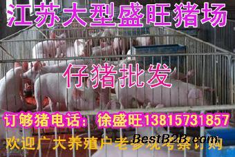 云南猪价格今日猪价小猪苗二十斤多少元一斤_