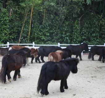 饲养动物损害责任