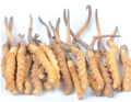 海珠回收冬蟲夏草價格如何蟲草回收介紹鑒別方法