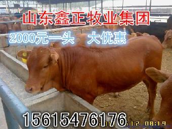 一头牛有多重._志趣网