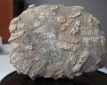 值得信赖的生物管虫化石拍卖公司