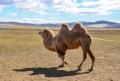 駱駝奶粉代加工駱駝奶粉貼牌生產