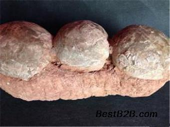 三连体恐龙蛋化石哪里鉴定收购价值高