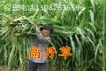 牧草种子销售价格