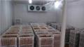 合肥專業回收大型凍肉速凍冷庫