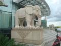 大象石雕一對 石雕大象圖片 石頭大象價格