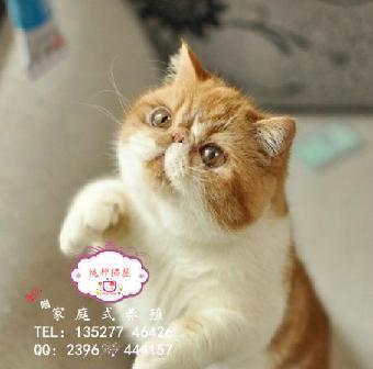 包子脸大眼睛长相可爱爱猫人速