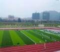 足球場11人制專用草坪一般在有賣的