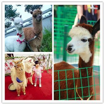 马戏团动物表演