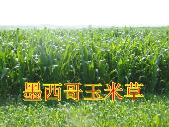 白城冬黑麦试验示范成功 种植结构调整添新选择