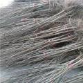 2公分石榴樹苗、2公分石榴樹苗基地
