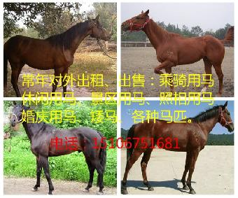 哪里有卖骑乘马的多少钱一匹