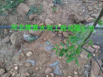 玉林猕猴桃果树灌溉滴灌PE管规格 16mm果园