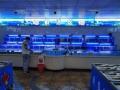 東莞定做海鮮缸-東莞海鮮魚池定做-東莞梯形海鮮魚缸