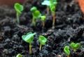 学习芽苗菜的技术那个地方便宜-益康园芽苗菜
