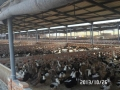 安慶雞舍聚氨酯噴涂現場施工 聚氨酯噴涂施工報價