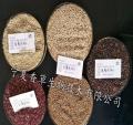 黄藜麦种子当年新货 藜麦种子基地种植原粮种