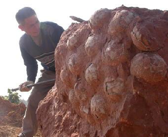 化石幼兽怎么样_双人五子棋对战五子棋双人对战化石幼兽对战