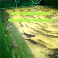 帆布魚池 帆布水池 魚苗培育槽 篷布水池養殖池