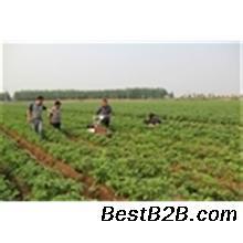 我爱工具播种机小型v我爱汽车播种机免耕发明播油菜套装蔬菜套图片
