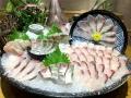 北京哪里有賣池魚王的