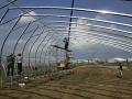 溫室大棚幾字鋼大棚的安裝