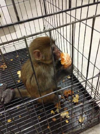 真实小猴子图片-小猴图片大全可爱图片-猴子剪图片-小